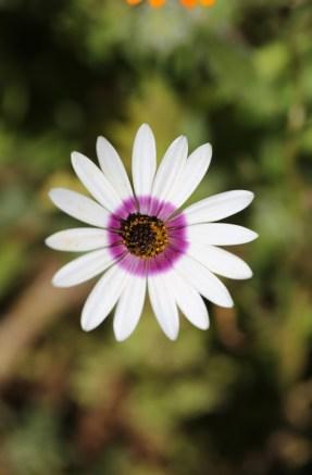 Postberg flowers-1554
