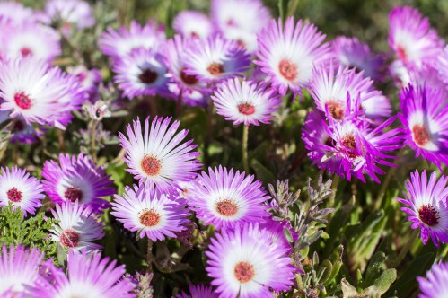 Postberg flowers-4171