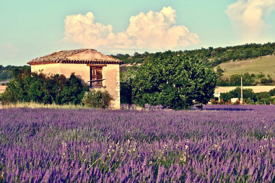 europe-by-rail-provence-wildflowers-min