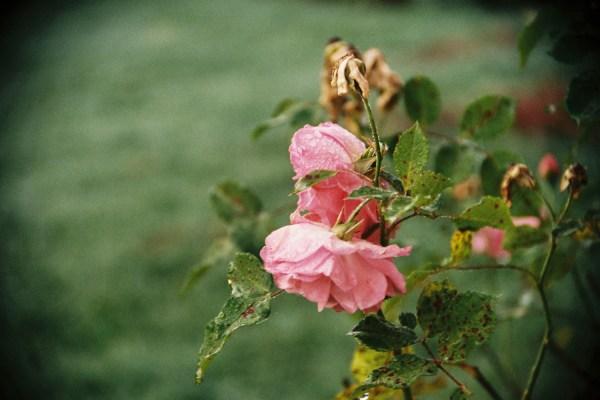 Sweet Franche-Comté #2 – Mont d'Or et jardin automnal