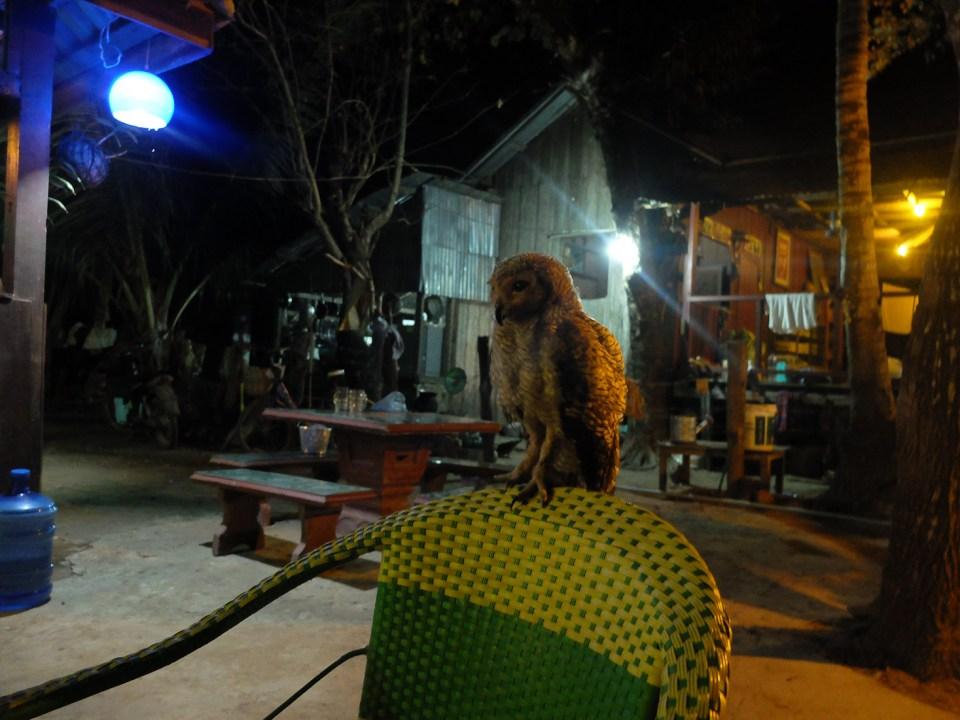 Dawei Teyzit beach-14