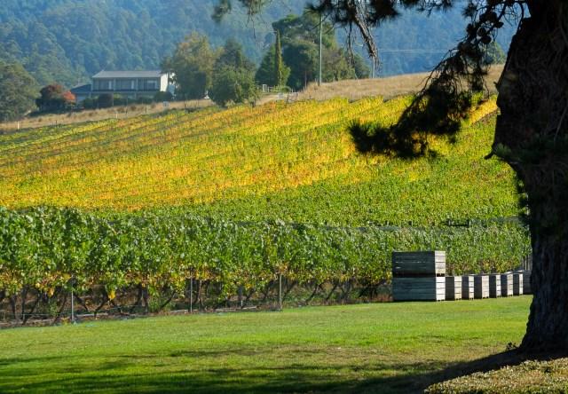 Tasmanie vin