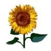 sunflower100px-whtbg