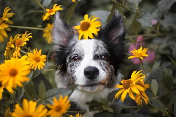 Curare gli animali con i fiori