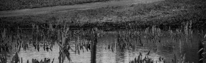 rocha_19feb17_hosp-grove-park80001