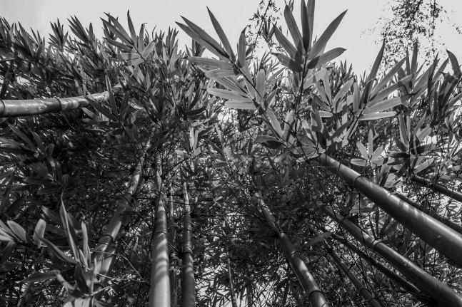 Rocha_4March17_Bontantic Garden 120001