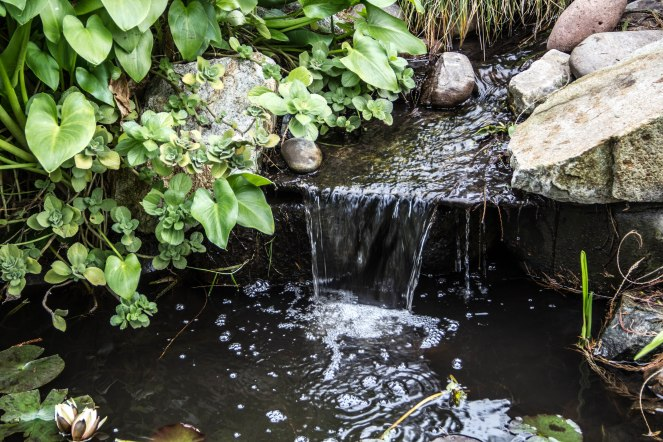 Rocha_4March17_Bontantic Garden 200001