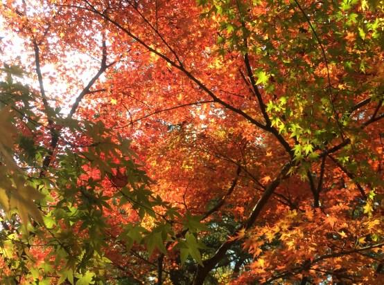 oyo-kyoto-momiji-kinkakuji-rosalys2014-3