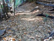 the path is soft with leaves