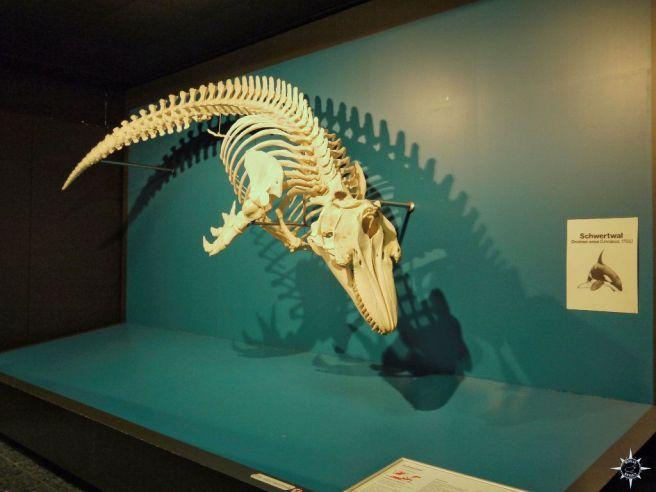 Zoologisches Museum