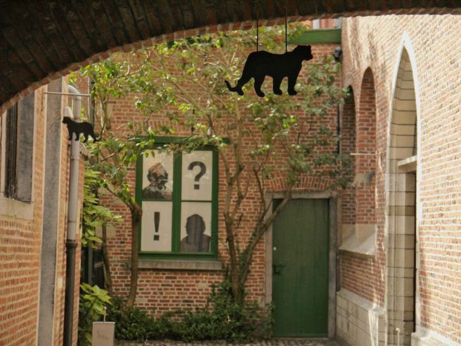 hinterhof-katzen-antwerpen