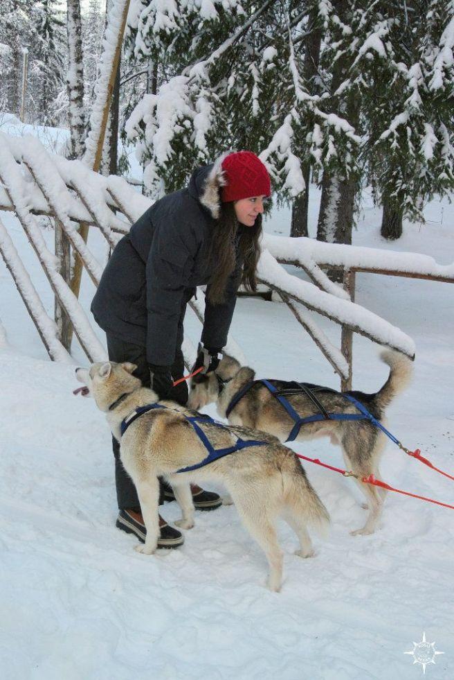 huskies-finnland-schlittenhunde