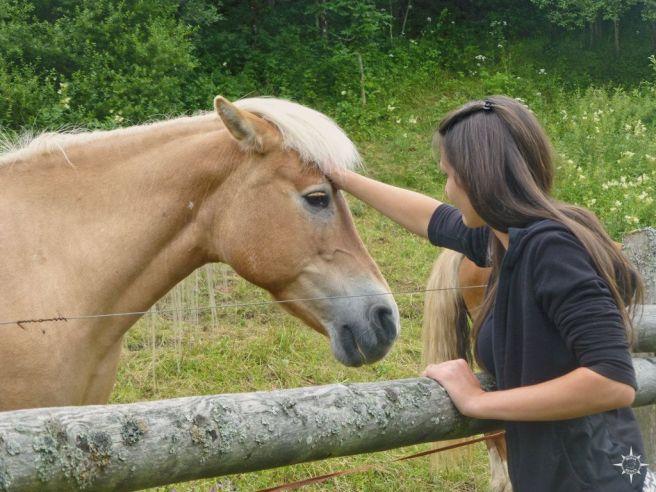pferd-bayern-radtour