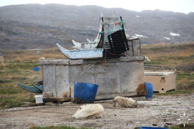 Groenland-Rosas-Reisen-Hundeschlitten