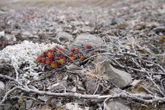 Grönland Rosas ReisenTundra