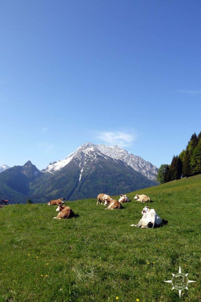 Rosas-Reisen-Berchtesgadener-Land-Hochschwarzeck-Bayern