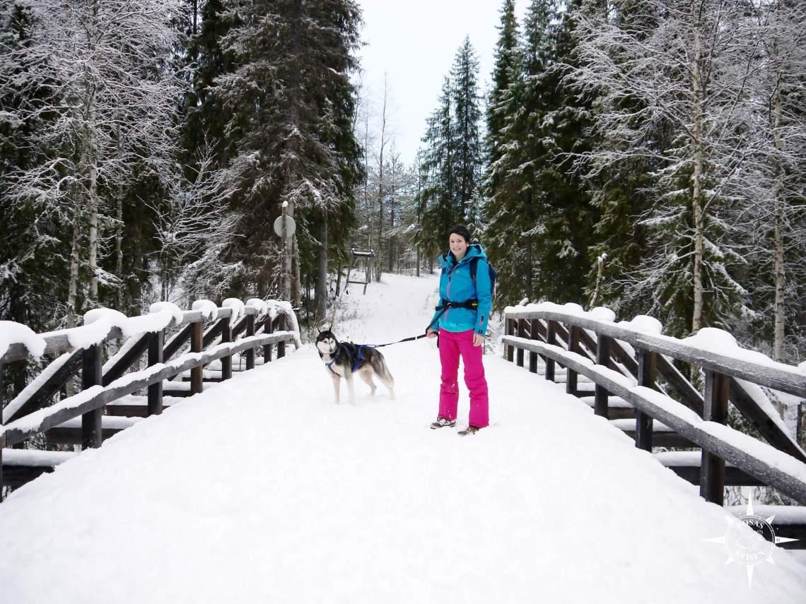 Rosas-Reisen-Farmstay-Finnland-Auslandsaufenthalt-Schlittenhunde