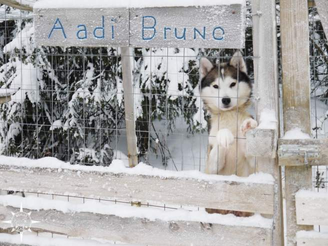 Rosas-Reisen-Finnland-Schlittenhunde-Verbotene-Liebe (10)