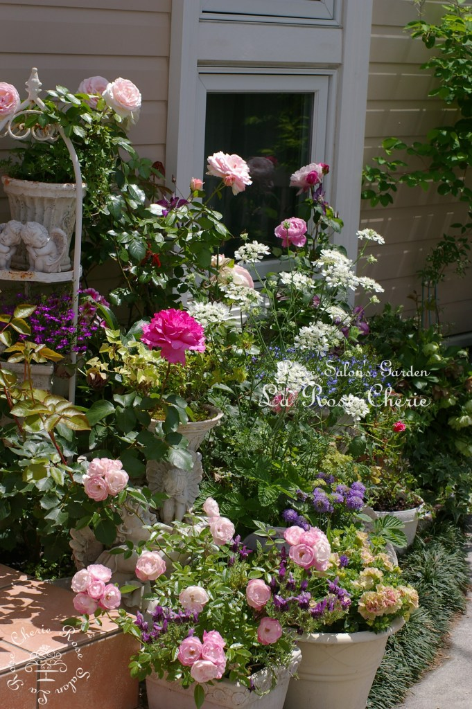 Rose Salon's Garden