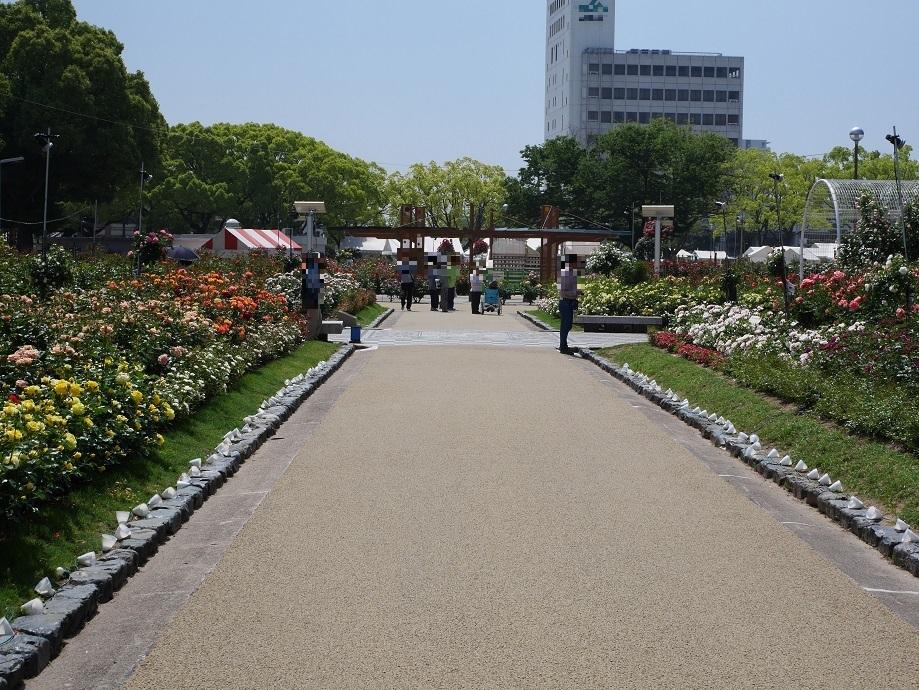 「福山ばら公園」の北側の入り口から入って南側に伸びるメインストリートを撮影。[2016年5月14日撮影]