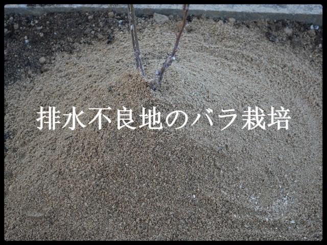 当サイトのコンテンツ「水はけが悪い土地でのバラの地植え|高植えのメリット・デメリット」のアイキャッチ。