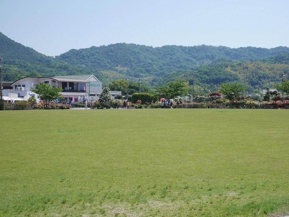 芝生を挟んだ場所から遠くの「よしうみバラ公園」を撮影した写真。