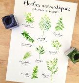 Planche d'herbes aromatiques