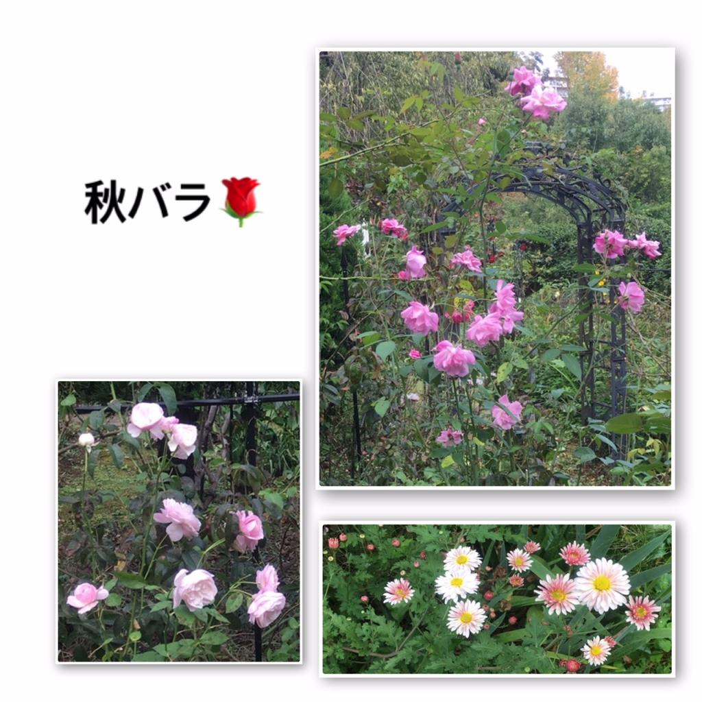 ローズ亭の秋薔薇