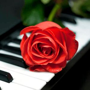 バラとピアノ