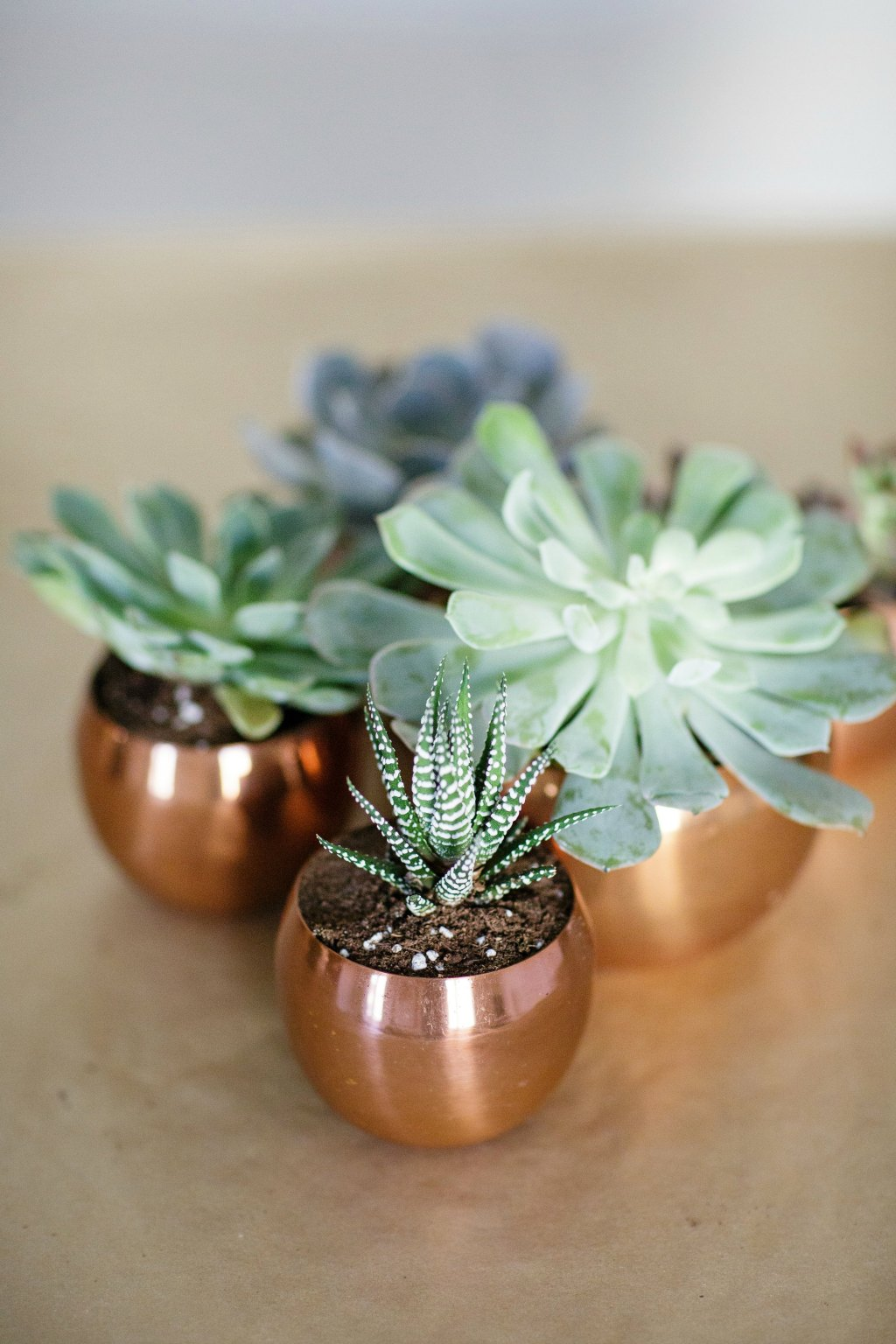 tips-for-planting-succulents-bourbon-rose-floral-design-rose-city-style-guide-canadian-lifestyle-blog-9