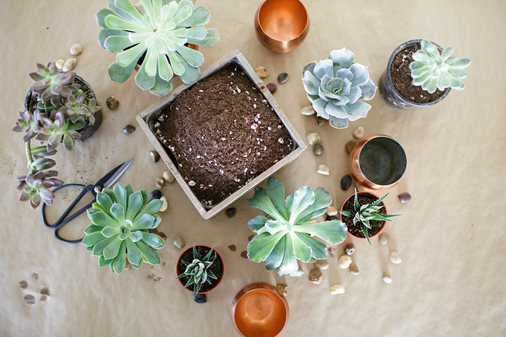 tips-for-planting-succulents-bourbon-rose-floral-design-rose-city-style-guide-canadian-lifestyle-blog