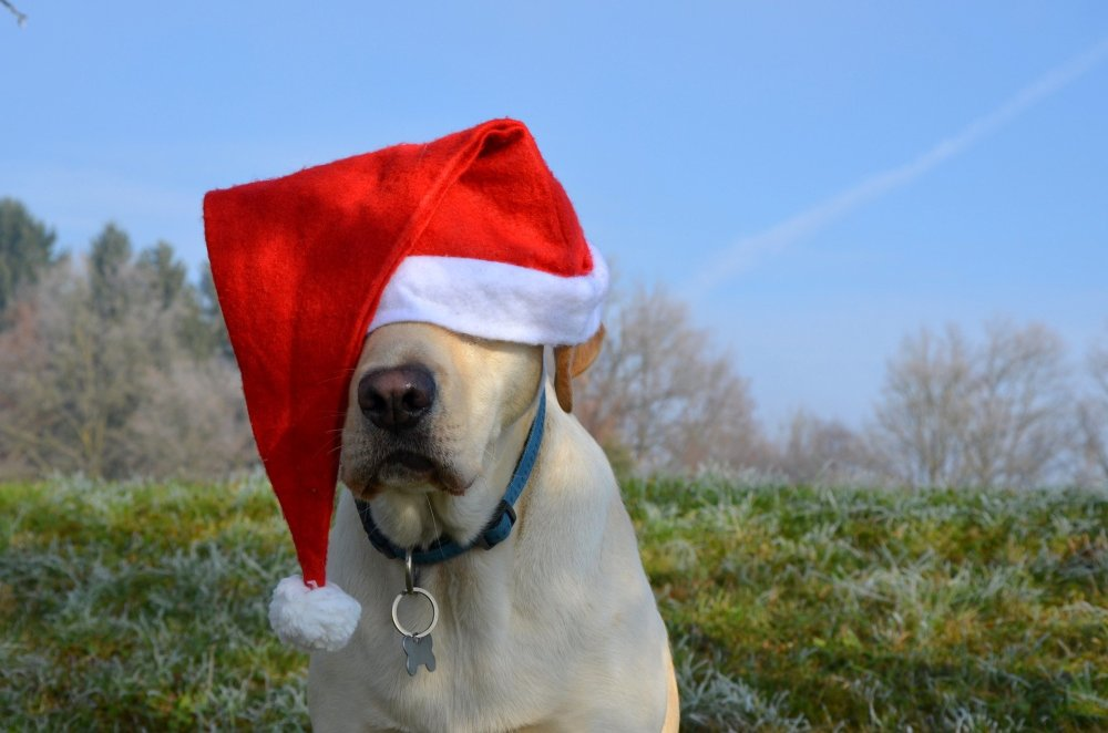The twelve myths of Christmas the HSE told me....
