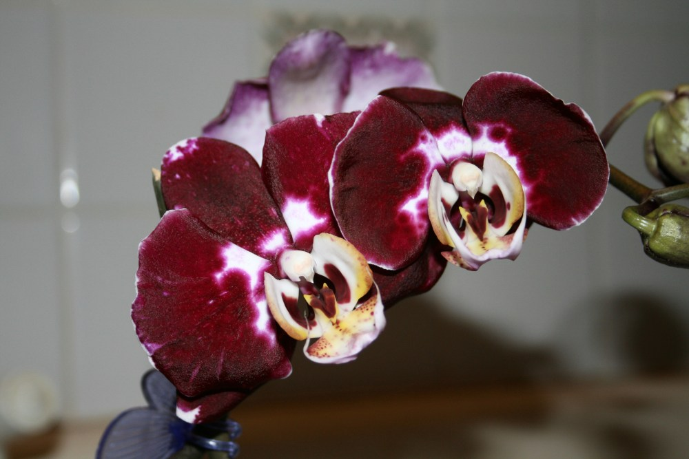 Orchids (2/4)