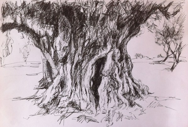 Part 3 Outdoors Exercise 1 Sketching Individual Trees