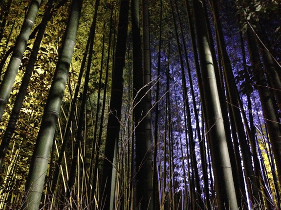 The bamboo forest lit up during the Arashiyama light festival.