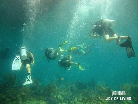 Diving around the reefs in Utila 2014