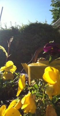 Yellow kettle repurposed