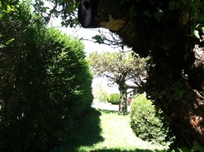 View of Hedge
