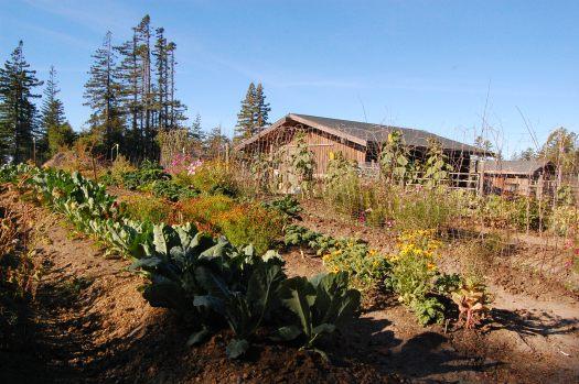 Summer Garden Roseman Creek Ranch