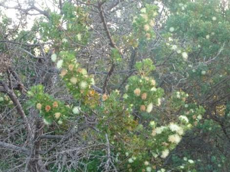 Native Western Australian Bush Perth