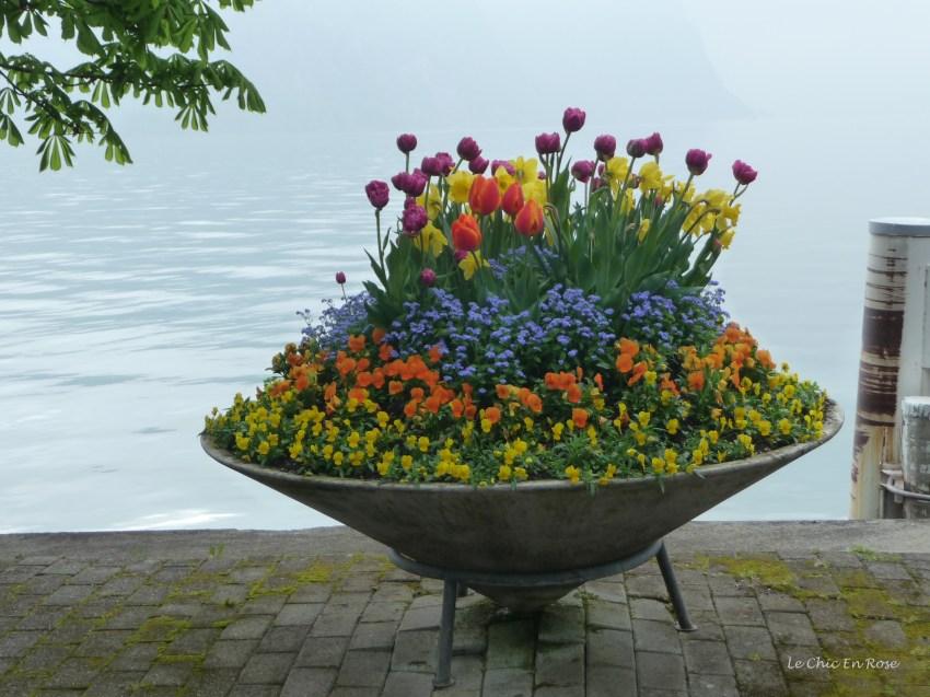Flowers Of Weggis