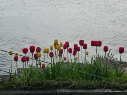 Poppies along the lake