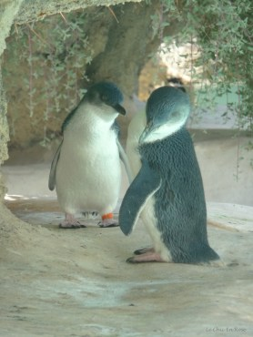 The penguins have always been a great favourite with our family!