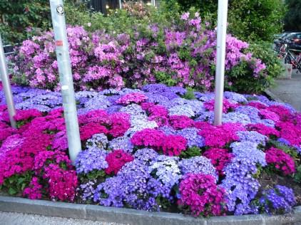 Vibrant flowers were in abundance