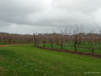 Vines at Cullens Winery near Margaret River