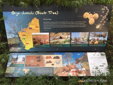 History of the Boab Tree in Kings Park and its successful relocation