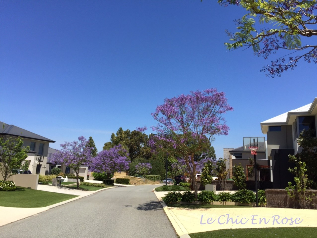 Another avenue lined with beautiful Jacarandas