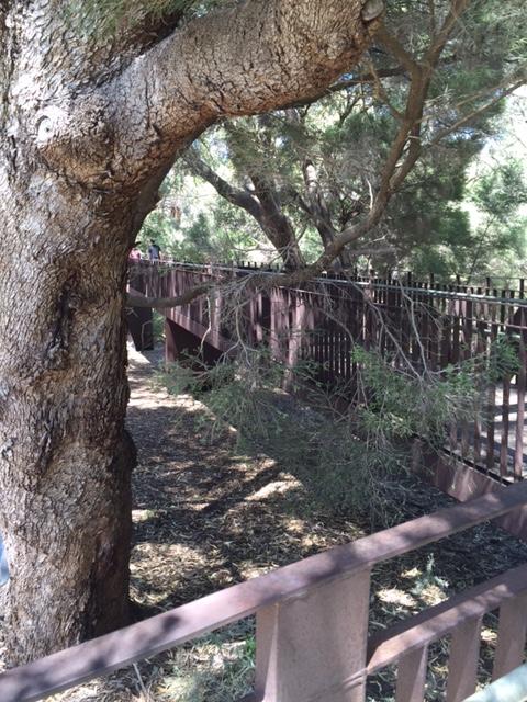 Marri Forest Federation Walkway - end of the bridge