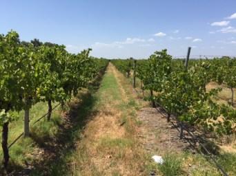 Vines at Oakover Estate