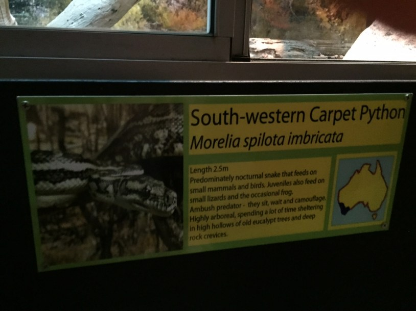 Information about the South-western Carpet Python